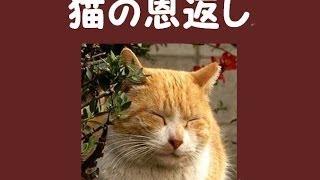 実話。猫の恩返し!! 恐喝高校生をネコが撃退、餌をくれる女子中学生を救う。
