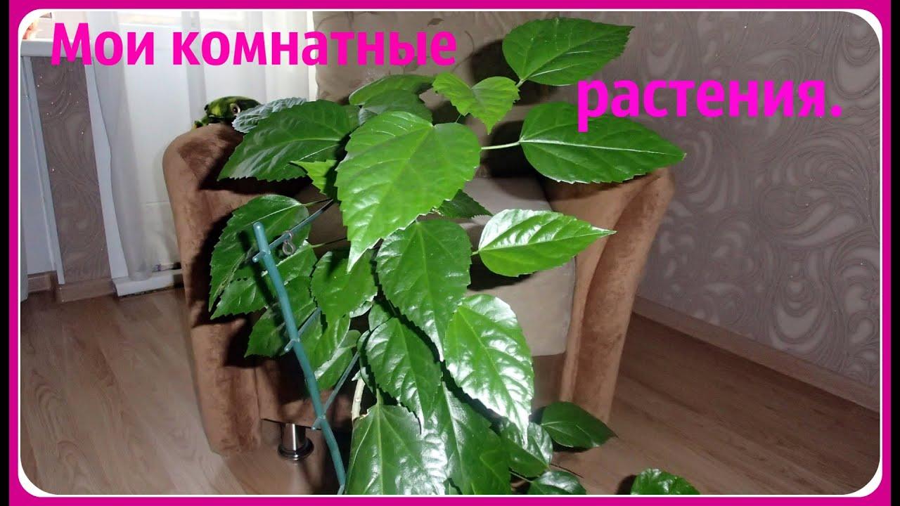 Цветы и растения комнатные