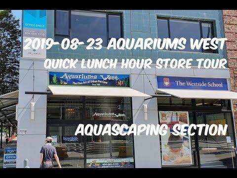 2019-08-06 Aquariums West – Lunch Break Visit – Aquascaping Store – 4K Ish