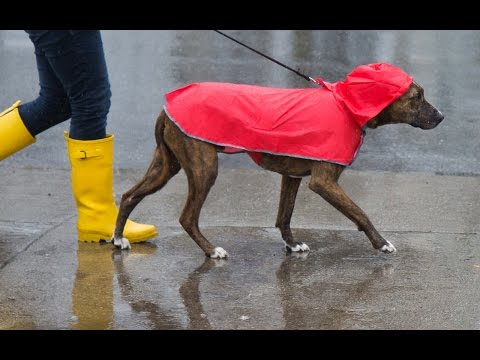 RC Pets - Packable Rain Poncho