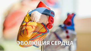Доктор БОКЕРИЯ. Эволюция сердца