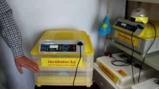 видео Промышленный инкубатор: описание популярных моделей и где их можно купить