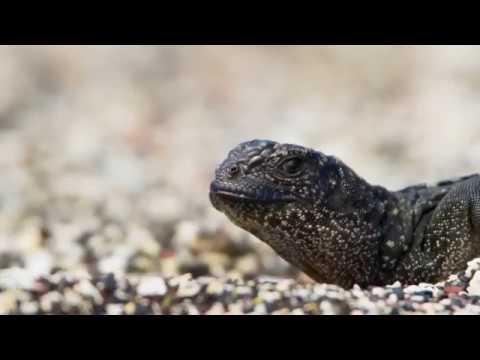 Sistema circulatorio de los vertebrados - YouTube