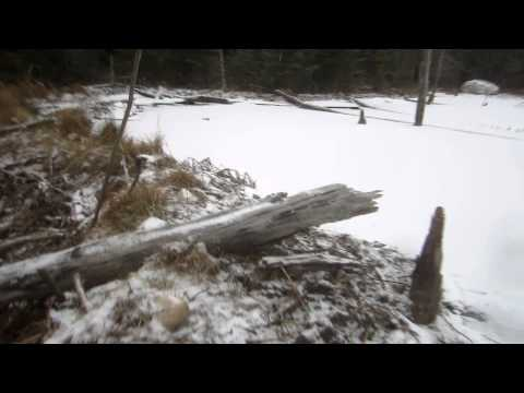 Travelling on Frozen ponds and Beaver dams