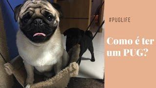 16 Motivos para não ter um Pug  SQN