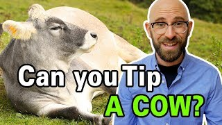 is-it-actually-possible-to-tip-a-cow
