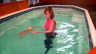 K9 Waves - Yellow Labrador Retriever Puppies - Part 2