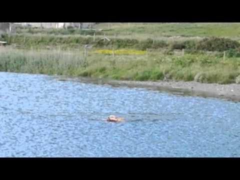 Nice dog in Aberystwyth - Wales - UK