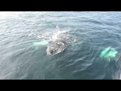 Nantucket Whale Watch 2012