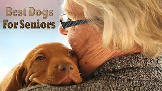 Top Dog Breeds For Seniors & Elderly