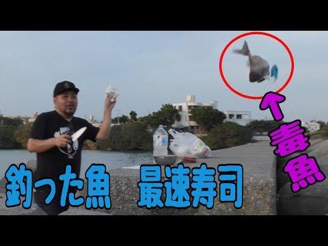 釣って最速で捌いて握るお寿司【新鮮】