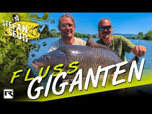 Karpfenangeln am Fluss | So findet und fangt ihr große Fische | Angeln auf Karpfen am Neckar