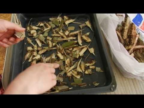 Как заваривать кору осины
