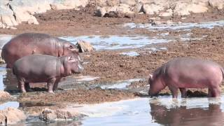GoPro : TANZANIE - ZANZIBAR 2015