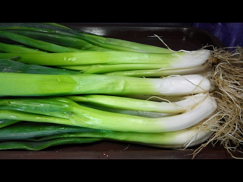 """Onion health benefits. Green onions are ,,grocery store"""" of vital substances!"""