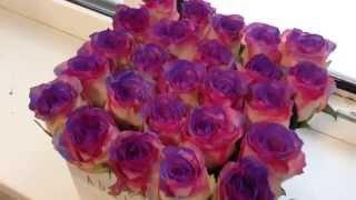 Adriatique | Розы-хамелеон(Первый в Самаре и Тольятти сервис по доставке цветов в шляпных коробках! ⚡Сенсация! Розы-хамелеон..., 2015-11-25T15:31:26.000Z)