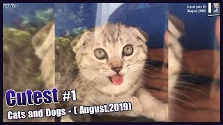 Cutest: Cats and Dogs #1 (August.2019) 😻 - 🐶 Awesome Cute Pet Animals' Life