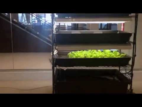DIY Indoor Farming With the FarmTower|RENEGADE (running organic hydroponics)