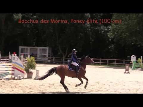 BACCHUS DES MORINS