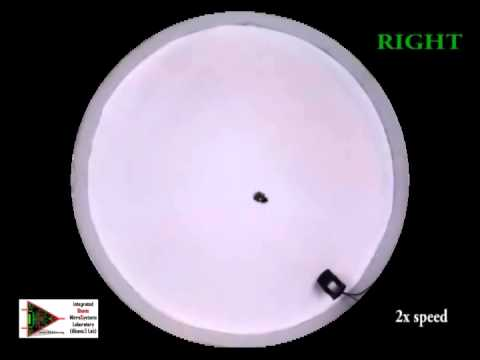 Acoustic Steering of Roach Biobots