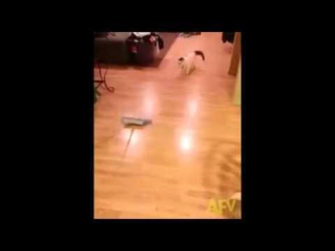 Katzen Curling