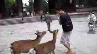 Nara Deer Park Japan Oct 2007