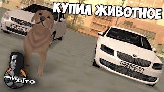 SMOTRA MTA | Собака в GTA!! Купил питомца!!!