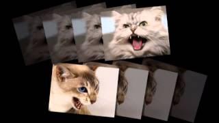 Злой кот: как - никак родственник тигров