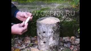 Посев грибов Вешенка