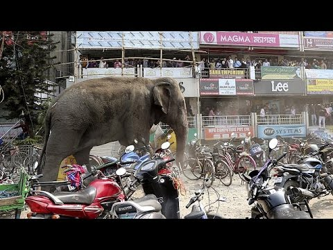 Elephant goes crazy in India