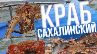 Вот это рыбалка Сахалинский краб Море камбалы