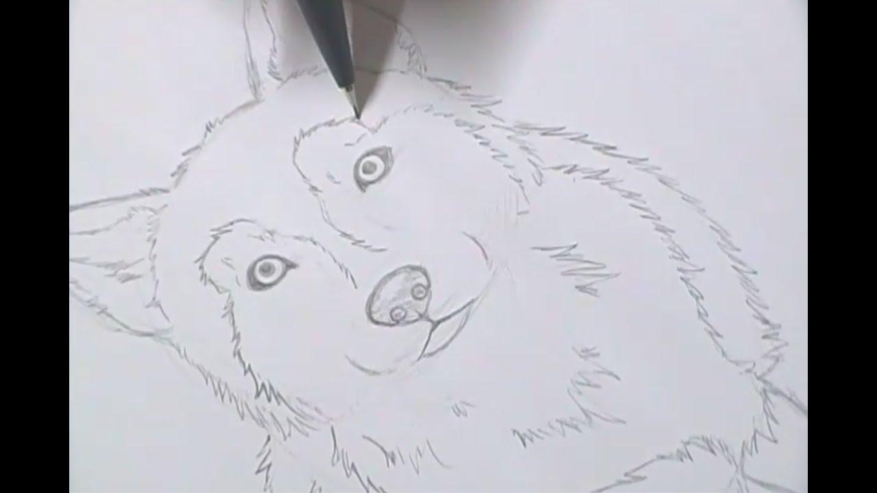 Tutorial Como Desenhar Cachorros How To Draw Dogs Youtube