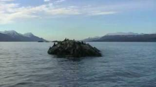 Viaje Por Sudamerica Di Giacomo Sanesi. Ushuaia (arg). 01085 - Canale Di Beagle 7