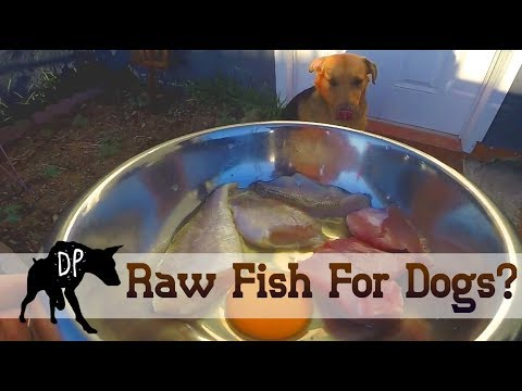 Raw fish for Dogs? | Raw Feeding Vlog