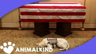 6 animals who grieved the loss of their humans