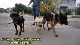 KÖPEĞİMİ ÖLDÜRDÜLER!! - SORU CEVAP - Alman Kurdu , Rottweiler , Kangal