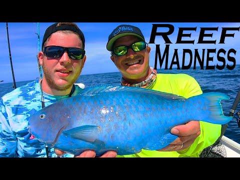 REEF MADNESS!!!! Island Life Fishing Charter