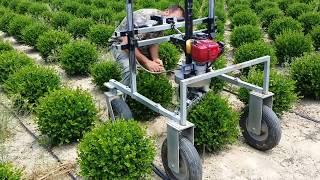コロンと丸い植木がボコボコできる。剪定バリカンロボットが登場(イタリア)