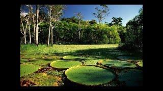Путешествие по реке - Амазонка. Документальный фильм