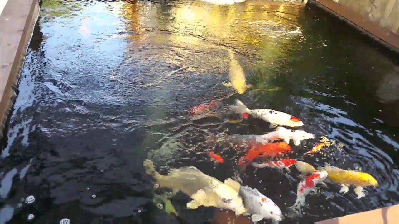 My 3000 gallon koi pond youtube for Koi pond gallons