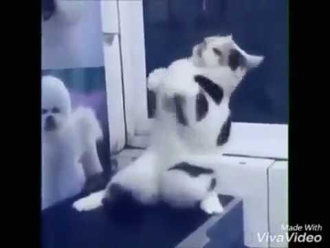 Прикол танцующий кот
