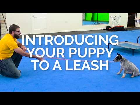 Get ANY PUPPY To Walk POLITELY On A Leash!