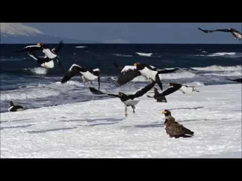 写真家泊和幸 作品集 北海道野生動物 フィールドの仲間たち