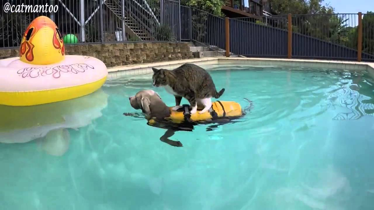Cat In Swimming Pool : The way cat enjoying fun in pool with kind assistance