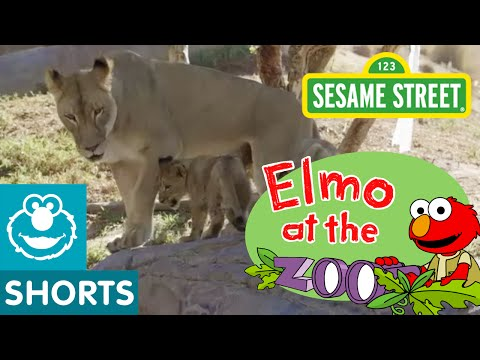 Sesame Street: Elmo Meets Animal Families (Elmo At The Zoo #6)