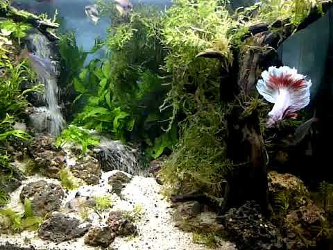 aquascape waterfall bold - YouTube