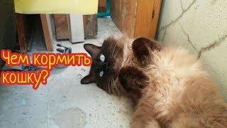 Чем кормить кошку? Говорящий кот./ Marsik CAT