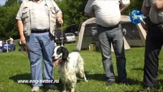 117-я Московская межрегиональная выставка охотничьих собак. Старший ринг кобелей