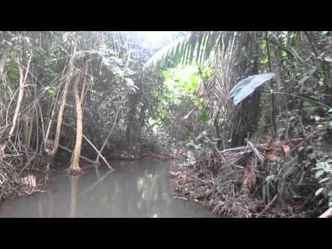 Bird Songs of the African Swamp