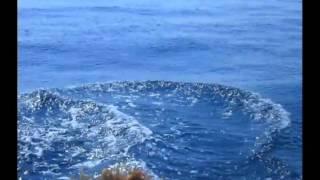 Дельфины в Крыму .  Солнечногорское. Тихая дача.(, 2010-09-21T19:32:24.000Z)